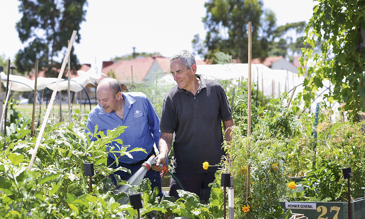 Community Gardens Reap What You Sow Salife